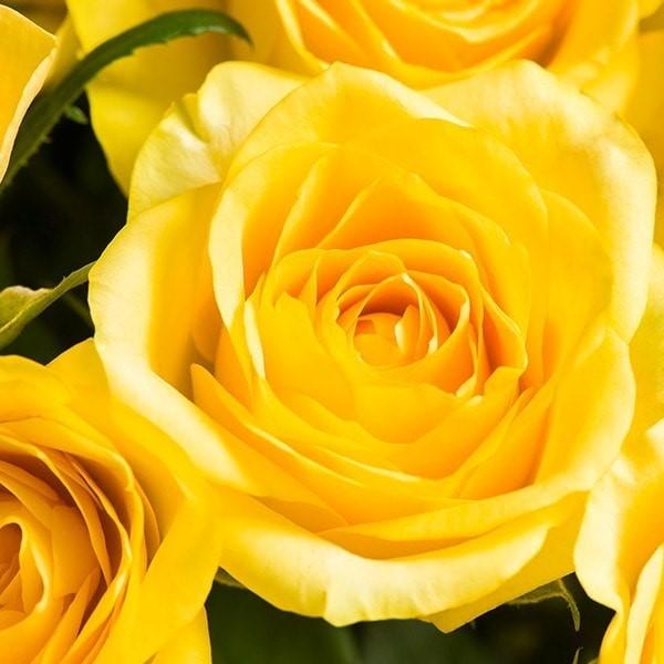 Yellow rose bouquet morrisons flowerworld 008e6gt ming 008gsqn ming mightylinksfo